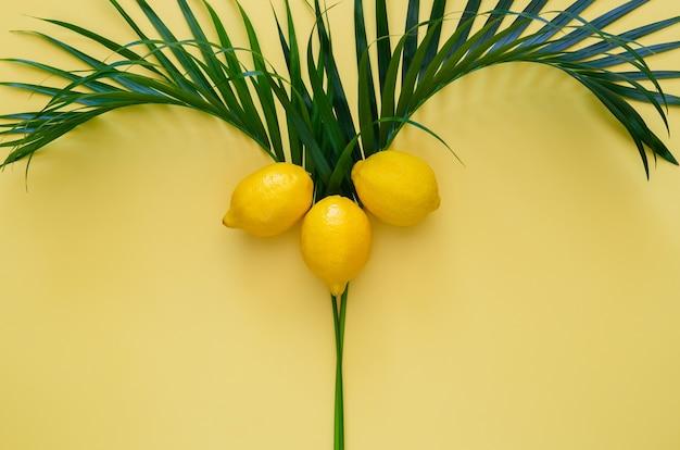 Cytryny na drzewie kokosowym na żółtym tle