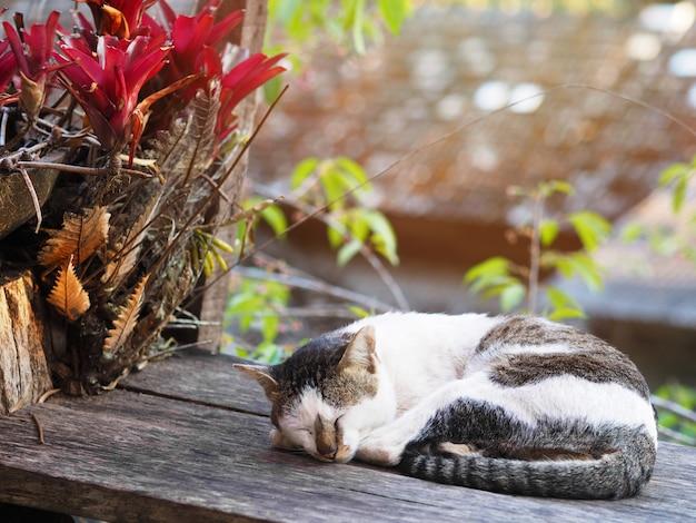 Czapka do spania leżącego na drewnianym stole
