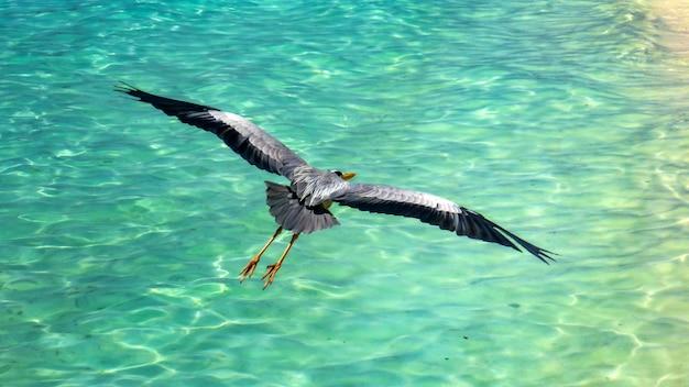 Czapla przelatuje nad turkusową wodą malediwów.
