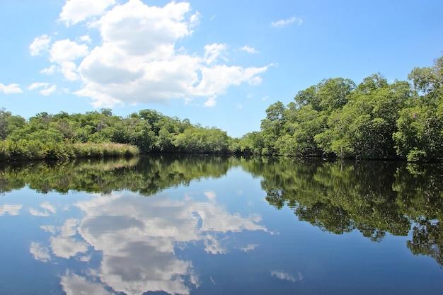Czarna Rzeka Na Jamajce Premium Zdjęcia