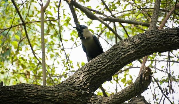 Czarna wrona na obrazie drzewa