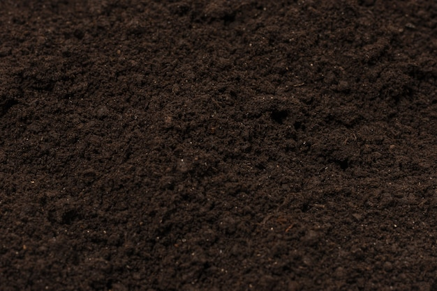 Czarna ziemia dla rośliny tła.