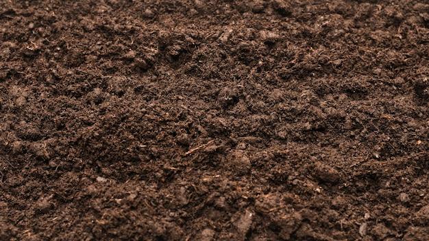 Czarna ziemia na tle roślin. widok z góry.