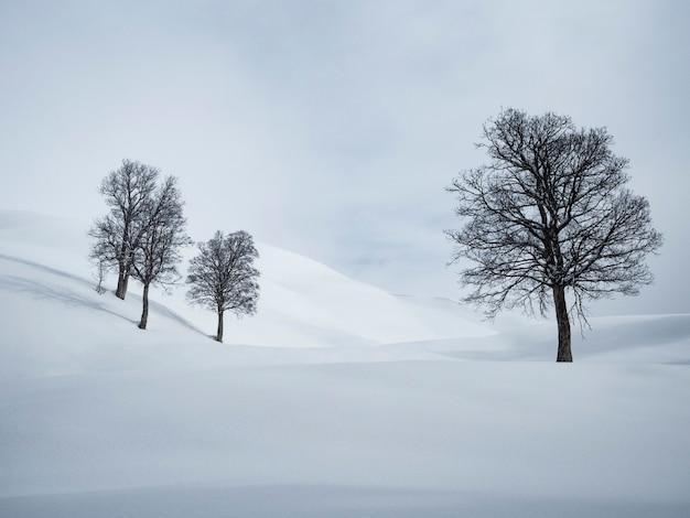 Czarne drzewa na białym śniegu i niebie. minimalistyczny krajobraz