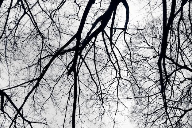 Czarne gałęzie