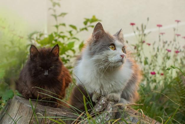 Czarne i szare koty między kwiatami na wiosnę.