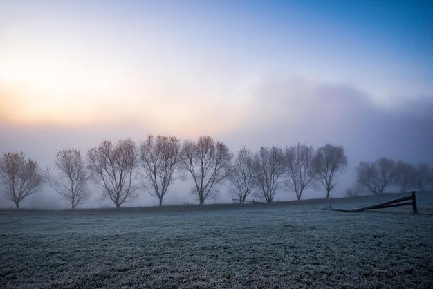 Czarne sylwetki małych drzew pokrytych niebieską puszystą mgłą w malowniczych karpatach na pięknej ukrainie