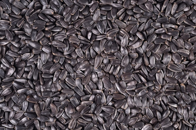 Czarne tło nasion słonecznika