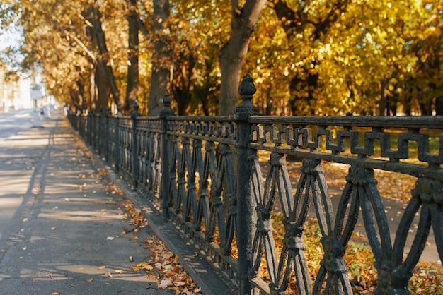 Czarne żelazne ogrodzenie parku miejskiego, jesienne drzewa i liście na asfalcie