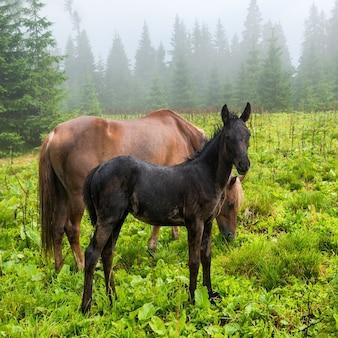 Czarne źrebię i konie pasące się na mglistym zielonym polu