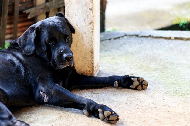 Czarnego psa dosypianie z miękką ostrością w tle. nad światłem