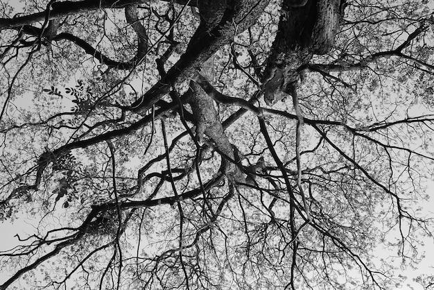 Czarno-biała gałąź drzewa