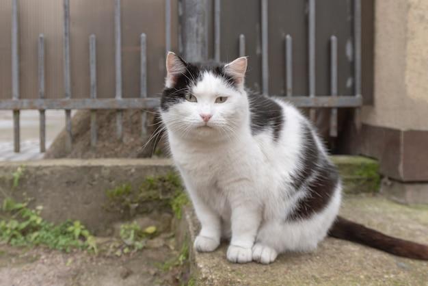 Czarno-biały bezdomny kot ze smutnymi oczami na miejskiej ulicy.