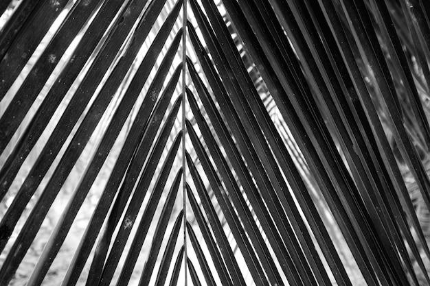 Czarno-biały bliska widok piękny zielony liść palmowy na naturalnym tle