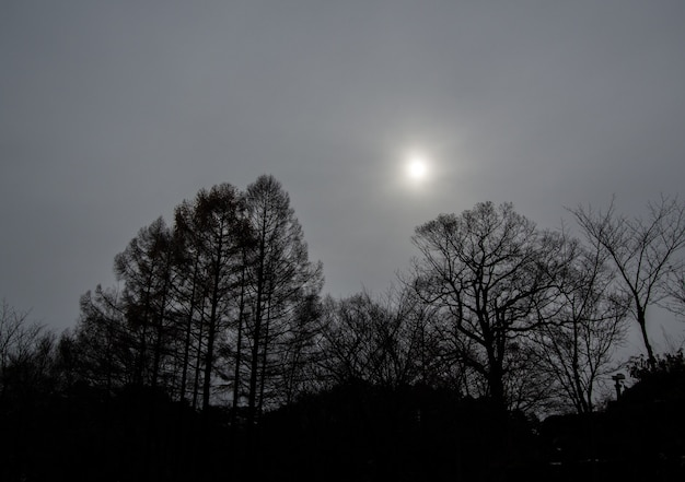 Czarno-biały dźwięk - drzewa na jesieni ze słońcem