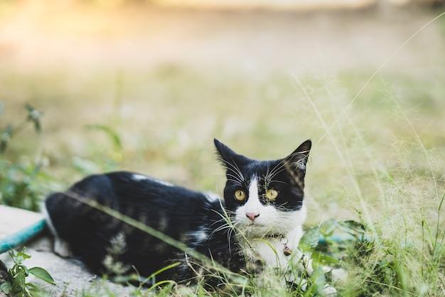 Czarno-biały kot bawi się w ogrodzie.