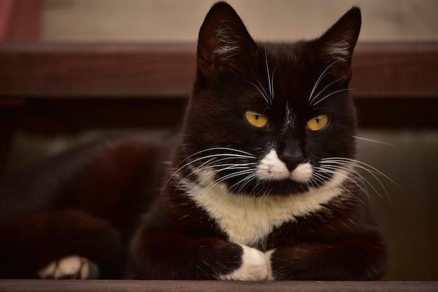 Czarno-biały kot leży na ulicy w pobliżu domu. czarno-biały kot na ulicy w pobliżu domu.