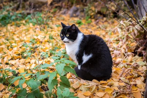Czarno biały kot na jesień dywan żółtych liści