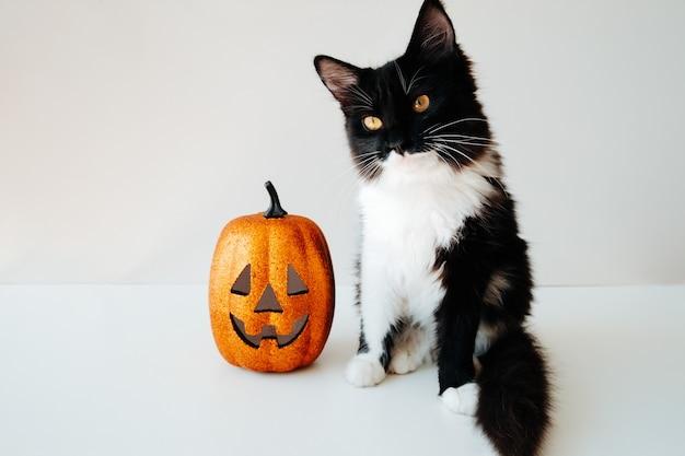 Czarno-biały kot siedzi w pobliżu dyni halloween dekoracji z twarzą na białym stole