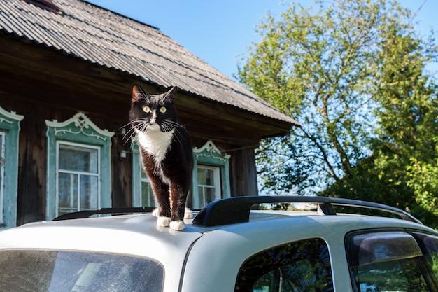 Czarno-biały kot stoi na dachu samochodu w pobliżu wiejskiego domu.