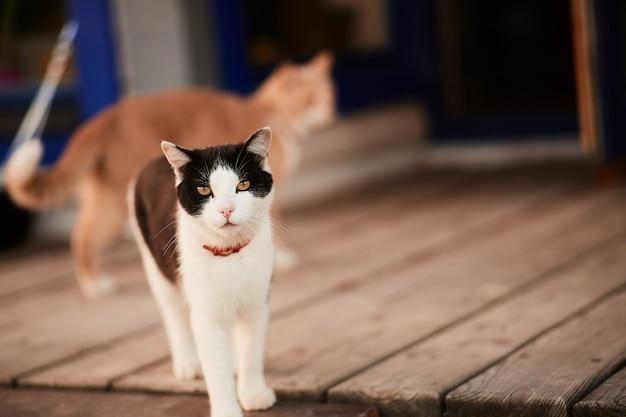 Czarno-biały kot stoi na drewnianym ganku domu wiejskiego