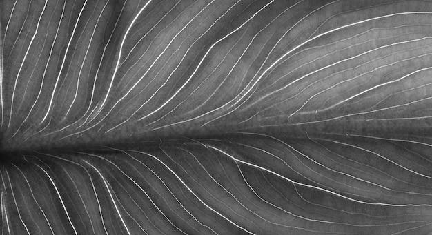 Czarno-biały liść