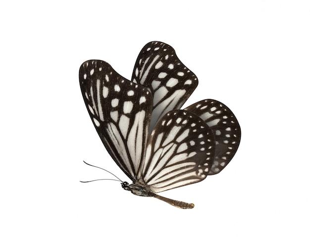 Czarno-biały motyl