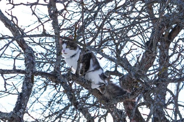 Czarno-biały puszysty kot siedzi na jabłoni w winter park.