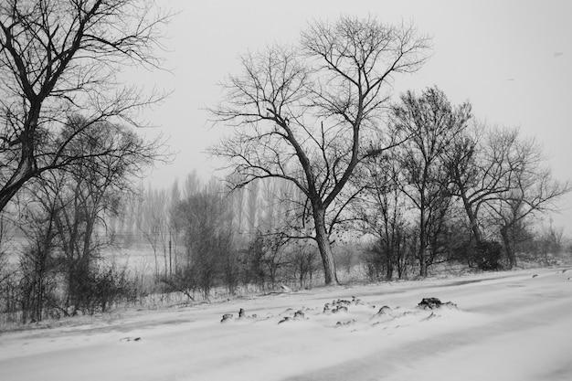 Czarno-biały zimowy krajobraz z drzewami podczas zamieci.