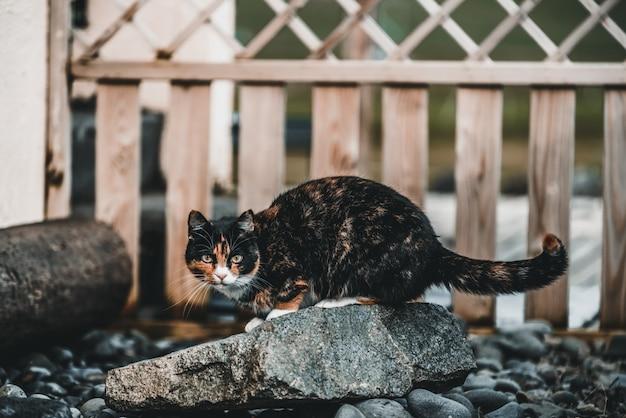 Czarno-brązowy kolor kota na zewnątrz domu.