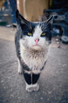 Czarny bezdomny kot szuka