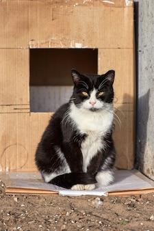 Czarny bezdomny kot z obrzezanym uchem siedzi przed pudełkiem i patrzy w kamerę
