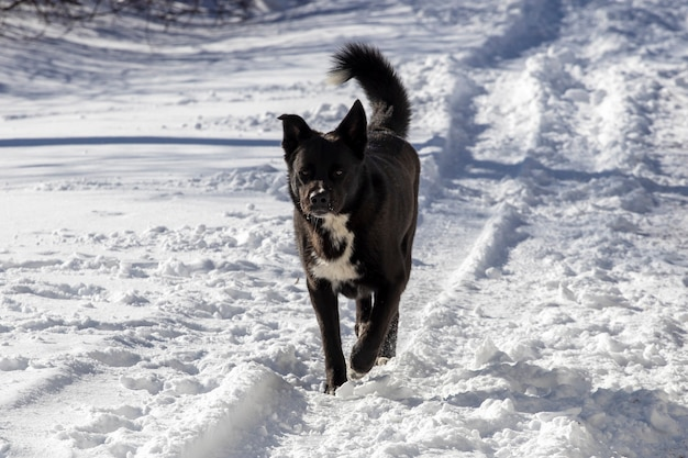 Czarny bezpański pies na ulicy w zimie. zdjęcie wysokiej jakości