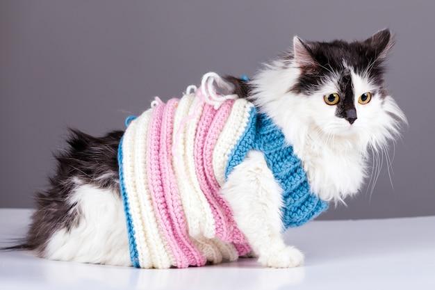 Czarny biały kot w zimowym swetrze z dzianiny na szarym tle