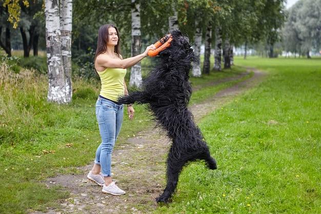 Czarny briard skacze po zabawkę trzymaną w ręku właściciela.