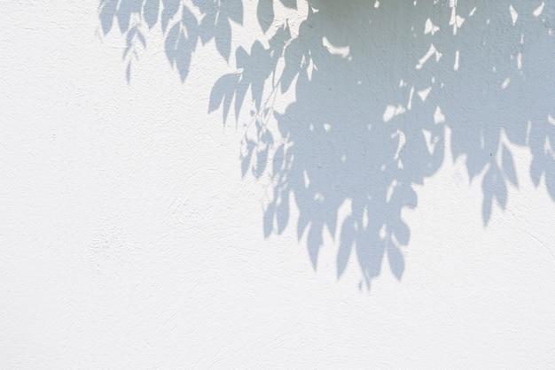 Czarny i biały abstrakcjonistyczny tło textuer cienie leaf na betonowej ścianie