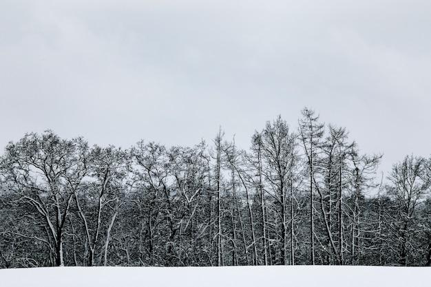 Czarny i biały zimowy śnieg europejski krajobraz leśny. pochmurne niebo. zimowy czas.