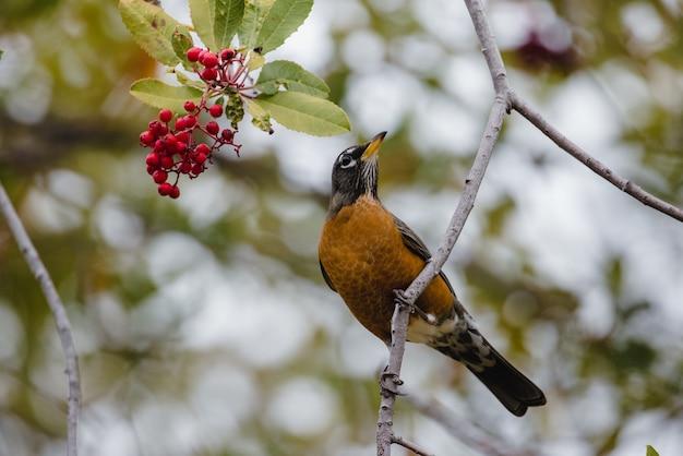 Czarny i brązowy ptak na gałęzi drzewa w ciągu dnia