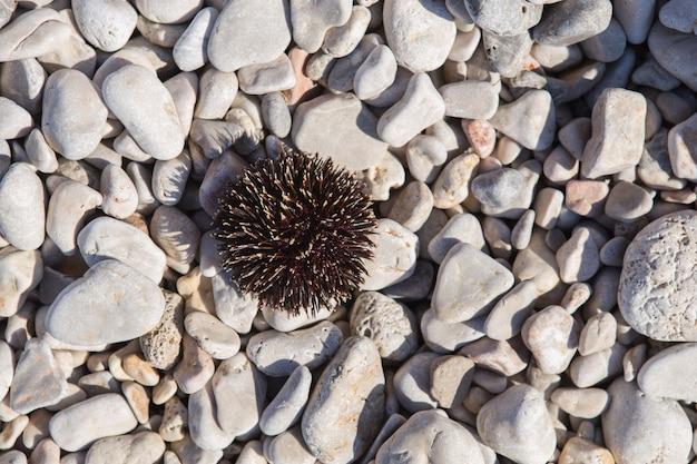 Czarny jeżowiec na plaży - kamień