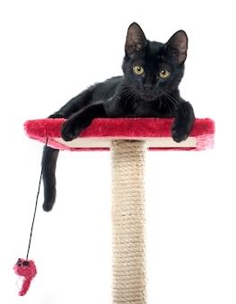 Czarny kociak grający