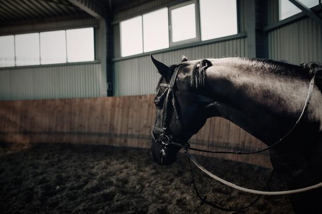 Czarny koń stoi w ciemnej ujeżdżalni