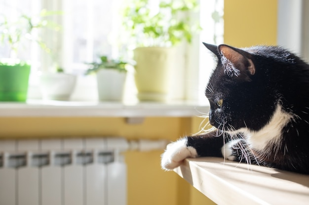 Czarny kot leży na stole i wygrzewa się w słońcu przy oknie z zielonymi roślinami domowymi. selektywne skupienie.