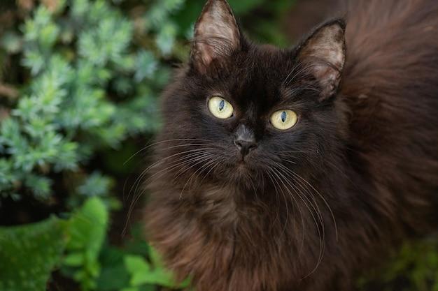 Czarny kot leży w kolorowych kwiatach i zielonym bokeh w tle