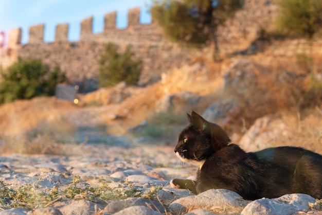 Czarny kot leży w promieniach słońca na tle starożytnego muru fortecy