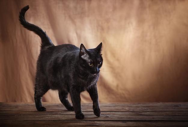 Czarny kot na brązowym tle