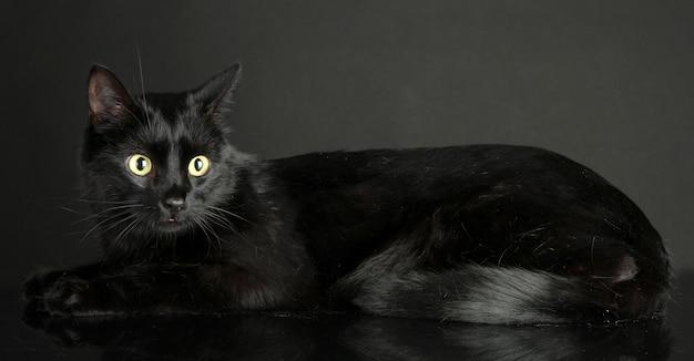 Czarny kot na czarnym tle
