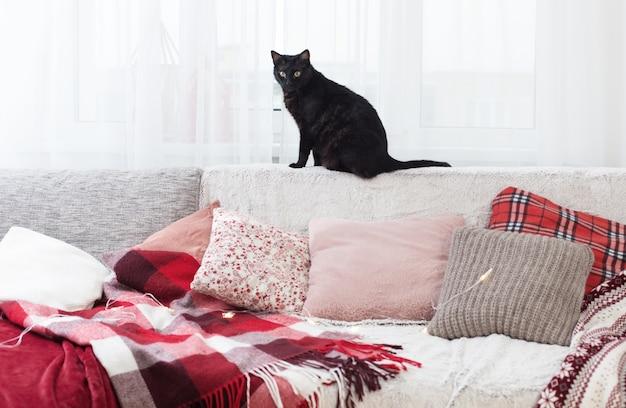 Czarny kot na kanapie z poduszkami i pledami