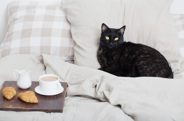 Czarny kot na łóżku w sypialni