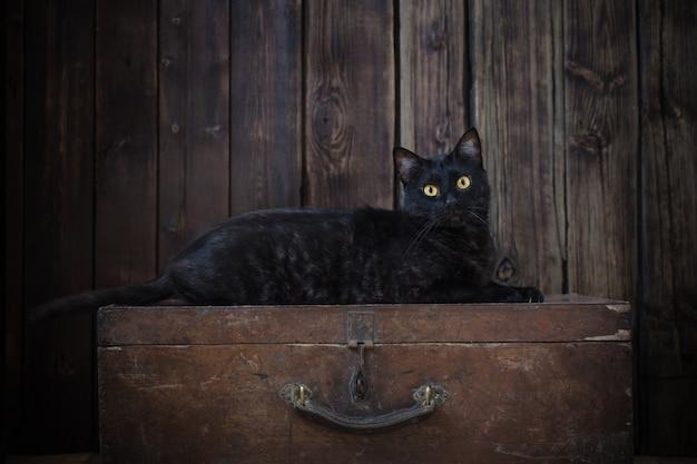 Czarny kot na starym ciemnym drewnianym