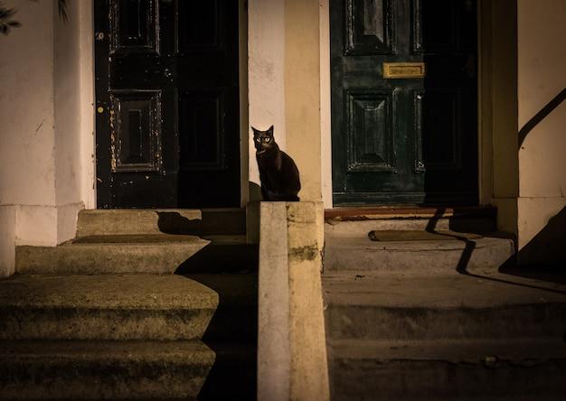 Czarny kot na ulicy